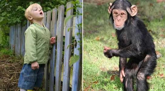 human-chimpanzee-kids