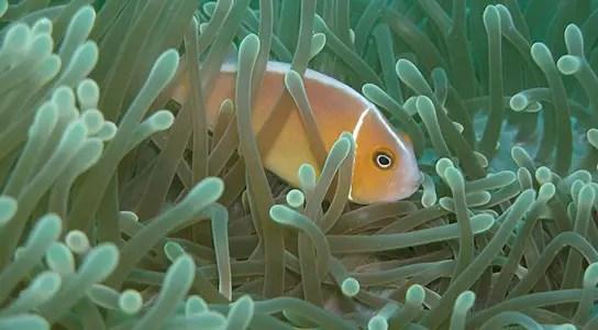 ocean-species-marine