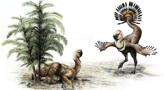 Artist's reconstruction of a 1.5-meter-long male oviraptor Ingenia yanshini flirting with a potential mate. Credit: Syndey Mohr
