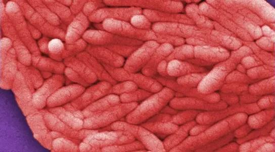 salmonella-bacteria-janice-haney-carr