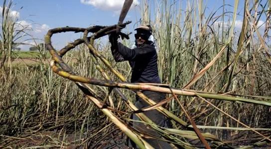 sugar-cane-ethanol-brazil