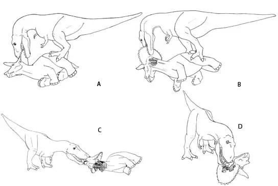 How Tyrannosaurus Rex Ate Triceratops Horridus