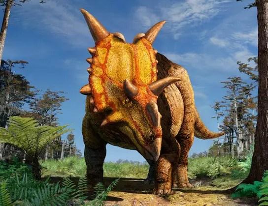 xenoceratops-wild