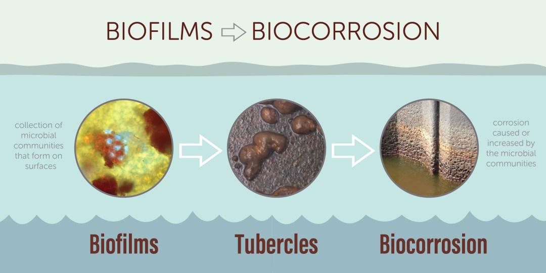 Biocorrosion