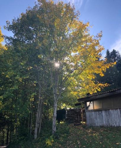 PHOTO-2019-10-12-22-55-25 9jpg