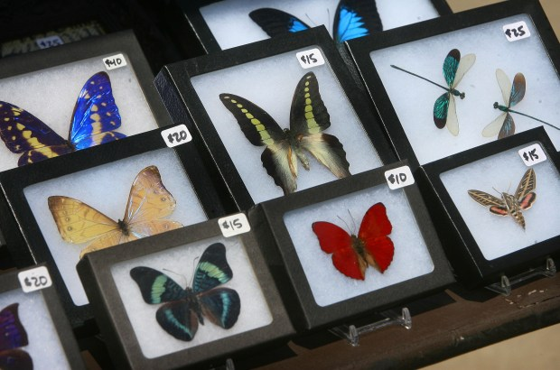 Framed insects were available for sale during last year's Insect Fair in Riverside. David Bauman, The Press-Enterprise/SCNG