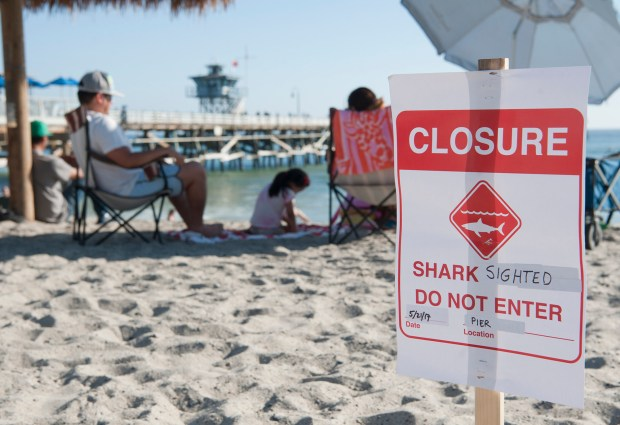 Lifeguards at San Clemente's Main Beach closed the water on Sunday afternoon, May 21, 2017, after a Sheriff's helicopter spotted several great white sharks near the shore.Photo By Jeff Antenore, Contributing Photographer