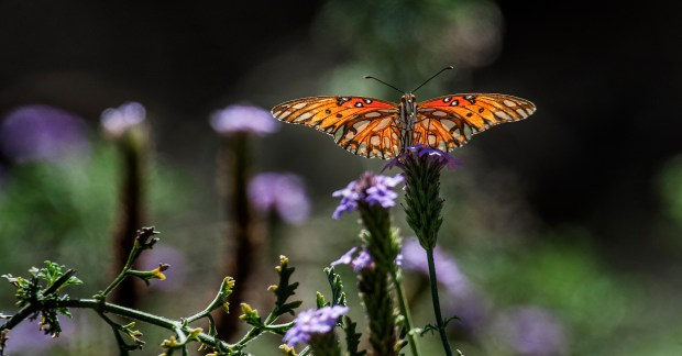 Head out to the open house at Shipley Nature Center, in Huntington Beach Central Park, on June 3. (File photo by Bruce Chambers, Orange County Register/SCNG)