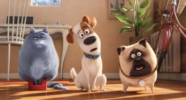 """""""The Secret Life of Pets"""" will turn up a few times at Orange County parks this summer. (Photo courtesy of Universal Pictures)"""