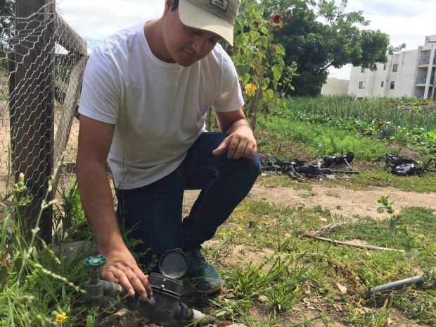 Cal State Fullerton student Miguel Aguayo checks a water meter at the farm at the Fullerton Arboretum where CSUF students help youths transitioning from the foster system learn to grow produce. (Photo courtesy of Cal State Fullerton)