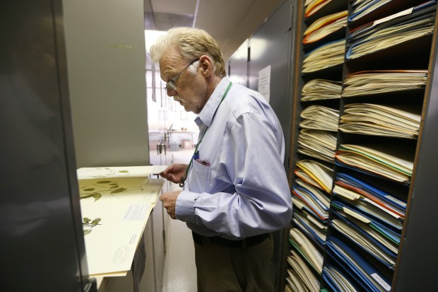 Curator/museum scientist Andrew Sanders looks for a particular plant species filed at the UCR Herbarium on Monday, June 19, 2017. (Stan Lim, The Press-Enterprise/SCNG)