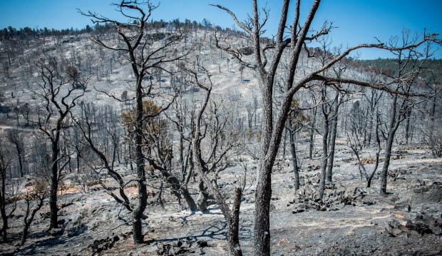 A burned over forests as the Holcomb Fire burns in the Holcomb Valley are of the San Bernardino National Forest near Big Bear, Tuesday, June 20, 2017. (EricReed/For The Sun/SCNG)