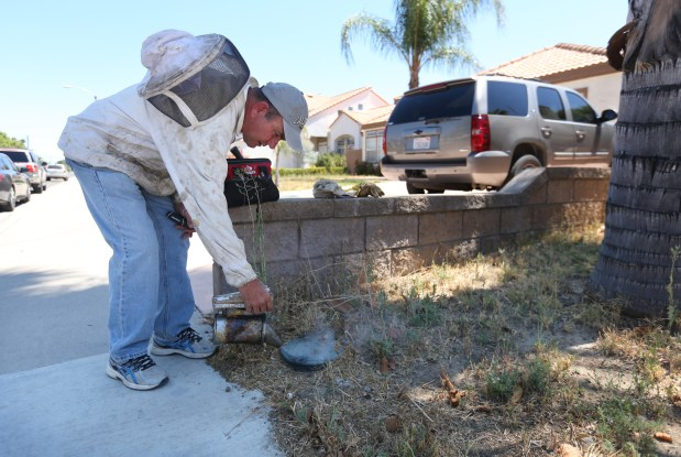Ron Duncan, owner of Ron's Bee Removal, prepares to remove a bee hive from an in-ground utility box outside a residents home in Perris on Monday, June 26, 2017. (Stan Lim, The Press-Enterprise/SCNG)