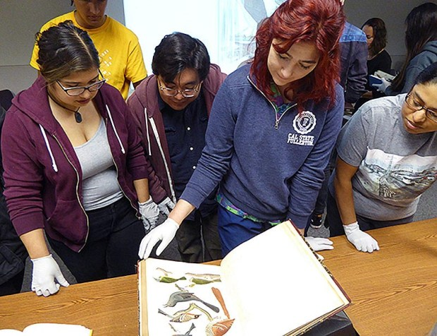 "From left, Cal State Fullerton students Maddie Ybarra, Robert Vargas, Ariana McKenzie and Evelyn Aguilar peruse the elaborate illustrations of birds in Alexander Wilson's ""American Ornithology,"" published in the early 1800s. (Photo courtesy of Bill Hoese)"