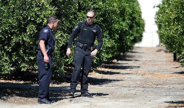 Redlands police investigate an alleged armed robbery Thursday June 29, 2017 after receiving a report a person was robbed at gunpoint in the 200 block of Pennsylvania Avenue. With the help of a San Bernardino sheriff's helicopter, a man identified as the suspect was captured in the orange groves off of W San Bernardino Avenue and Webster Street. (Staff photo by Rick Sforza, Redlands Daily Facts/SCNG)