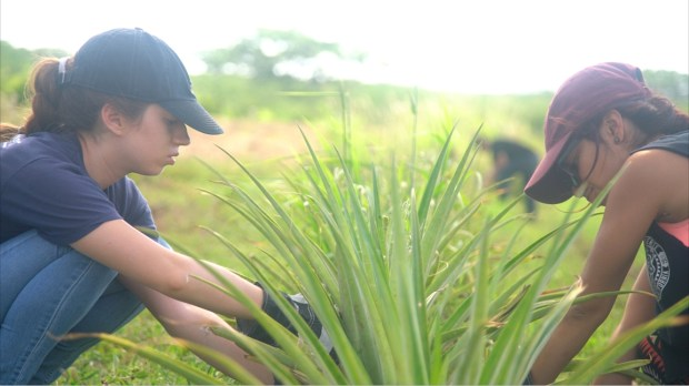 Estefania Gutierrez-Guerrero and Otilia Marquez pull weeds in a community farm in Vieques, Puerto Rico. (Photo courtesy of Alicia Afshar)