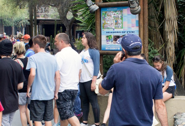 A man on a smartphone walks in a crowd at Knott's Berry Farm. (Photo by Mark Eades, Orange County Register/SCNG)