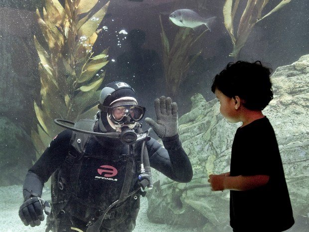 A diver feeding fish in the Aquarium of the Pacific's Honda Blue Cavern, stops to say hello to a land creature, Jeremiah Lall, 2. The nonprofit is undergoing construction for a new wing that is expected to open in 2018. Meanwhile ocean-lovers can visit daily 9am-to-5pm.///ADDITIONAL INFO: - Photo by MINDY SCHAUER, THE ORANGE COUNTY REGISTER - shot: 042016 scanart.042016.ms