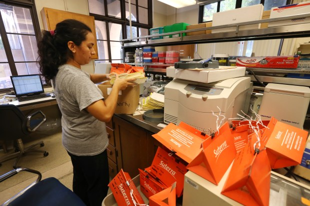 Diane Soto, a staff research associate, goes through a box of traps in a lab at UCR on Wednesday, Aug. 16, 2017. The traps were used to capture glassy-winged sharpshooters in the Temecula Valley's Wine Country. (Stan Lim, The Press-Enterprise/SCNG)