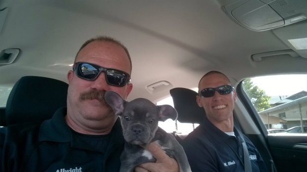 San Bernardino detectives rescued this puppy after it was reported stolen. (Courtesy photo)