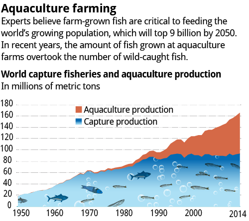 Source: The United Nations' Food and Agriculture Organization: The State of World Fisheries and Aquaculture 2016; Graphic: Paul Penzella – SCNG