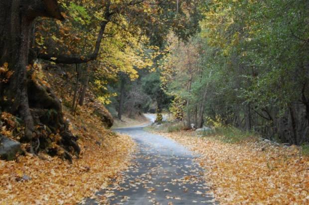 West Fork San Gabriel River Autumn etc