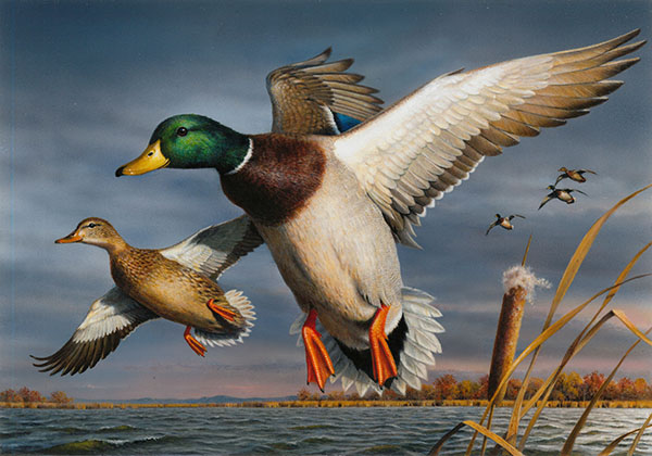 This acrylic painting of two mallards by Bob Hautman is the winner of the 2017 Federal Duck Stamp Art Contest. (Courtesy Photo)