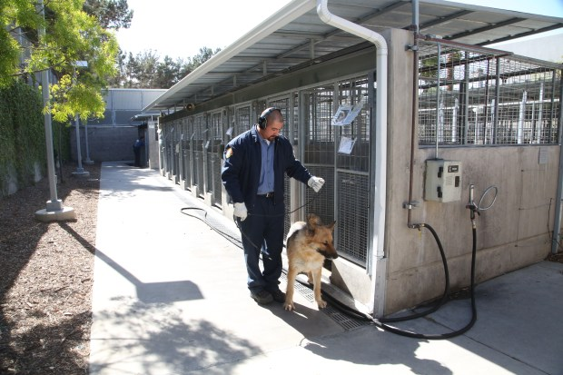 LA CityÕs six animal shelters will offer reduced adoption fees this weekend in honor of Black Friday. File Photo