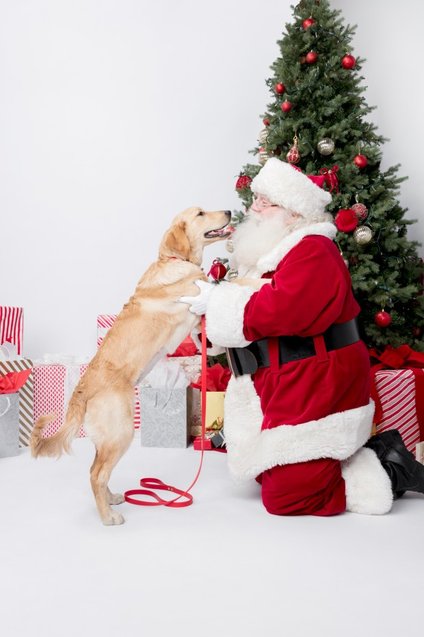 "During its ""Winter Nights,"" Westfield Topanga and The Village offer Santa Paws. (Courtesy of Westfield)"