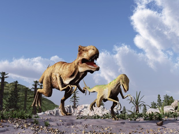 Studying the stride of dinosaurs, such as this Tyrannosaurus rex chasing a velociraptor, is the object of a research project in Cal State Fullerton's geology department. (iStock photo)