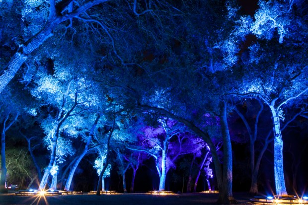 Symphony of Oaks © Jake Fabricius