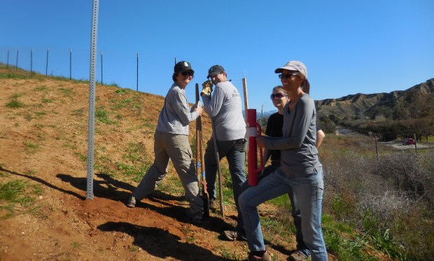 Redlands Conservancy volunteers work on a trail. The Conservancy's next trail-care day is Jan. 14. (Courtesy Photo)