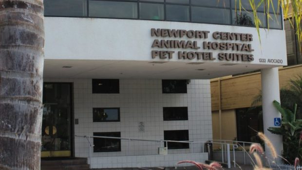 Costa Mesa will contract with the Newport Center Animal Hospital Pet Hotel Suites to house its strays animals while the city looks for a permanent provider. (Photo courtesy of City of Costa Mesa)