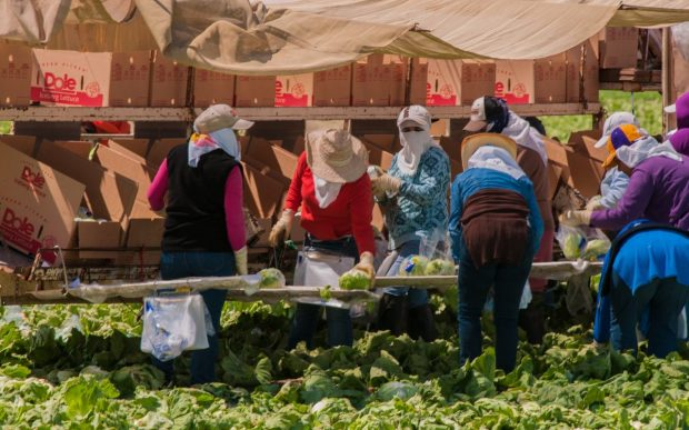 California farm workers tend to the fields. Photo: Bob Nichols/USDA