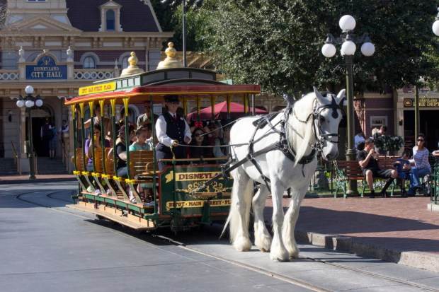 """A relaxing way to ride up or down Main Street U.S.A. is to take a seat in one of the horse-drawn trolleys. They only operate during daylight hours. Originally, the trolleys had a fare box, and the fare was 10 cents. You could also use an """"A Coupon"""" to ride the trolleys, until Disneyland eliminated the coupon books in the early 1980s. The horses only work four-hour shifts, and spend the rest of their time at the Circle D Ranch. The horses that pull the trolleys could be one of five types: Belgians, Percherons, Clydesdales, Brabants or Shires. The trolleys have changed very little over the years, other than some very small details in the paint scheme. //// ADDITIONAL INFORMATION: Generic photos of various Disneyland attractions, shops and restaurants as they appear in 2015. Disneyland.timelines.xxxx - 2/17/15, - MARK EADES, STAFF PHOTOGRAPHER"""