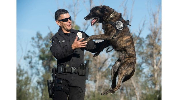 Santa Ana Police Department handler Officer Luis Galeana and his K-9, Puskas, in 2015. Puskas lost six teeth while apprehending a suspect on Monday, Feb. 26. (File photo by Ed Crisostomo, Orange County Register/SCNG)