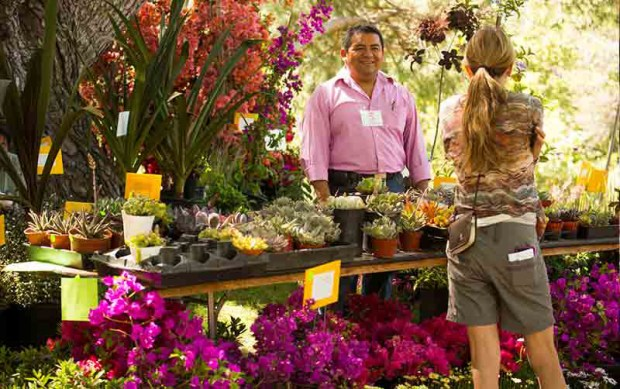 Local nurseries sell a variety of plants at the Fullerton Arboretum's Green Scene Plant & Garden Expo. (Photo courtesy of Cal State Fullerton)