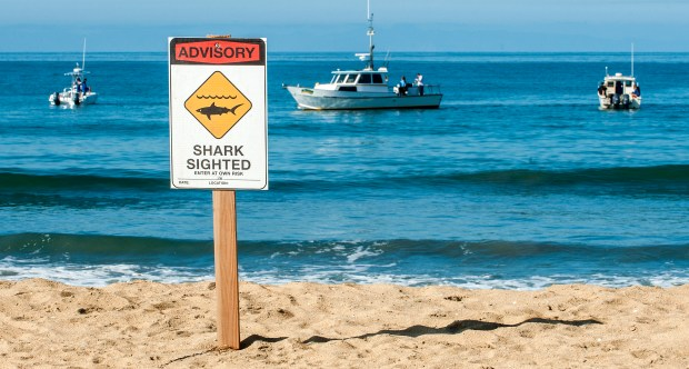 A sign on the beach warns beach goers of sharks in the water as team from California State University Long Beach Marine Shark Lab prepares to tag sharks. MARK RIGHTMIRE, THE ORANGE COUNTY REGISTER