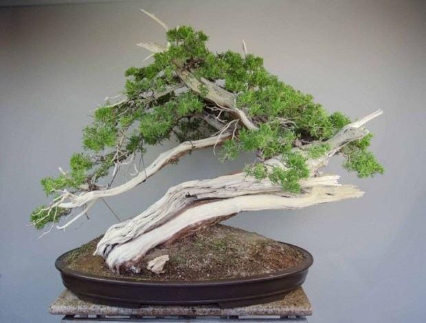 Beginners can learn how to grow bonsai at the Fullerton Arboretum on April 15. (Photo courtesy of Cal State Fullerton)