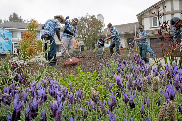 Turf Terminators replace the grass on Los Angeles city council member Mitchell Englander's home with a drought tolerant yard on Tuesday April 21, 2014. ( Photo by David Crane/Los Angeles Daily News )