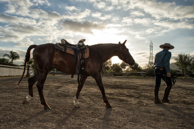 Bellator MMA featherweight Aaron Pico with his horse Canelo following a riding session in Whittier. (Hans Gutknecht/SCNG)