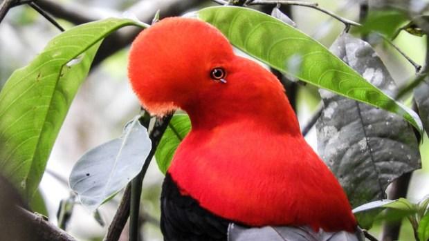 Durante el Global Big Day 2018 fueron avistadas 6.899 especies de aves en todo el mundo. (Foto cortesia de Pro-colombia)