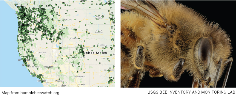bees map
