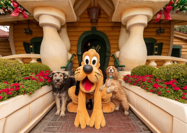 Lady And The Tramp Dogs Visit Pluto At Disneyland Before Disney Debut Of Live Action Remake Orange County Register