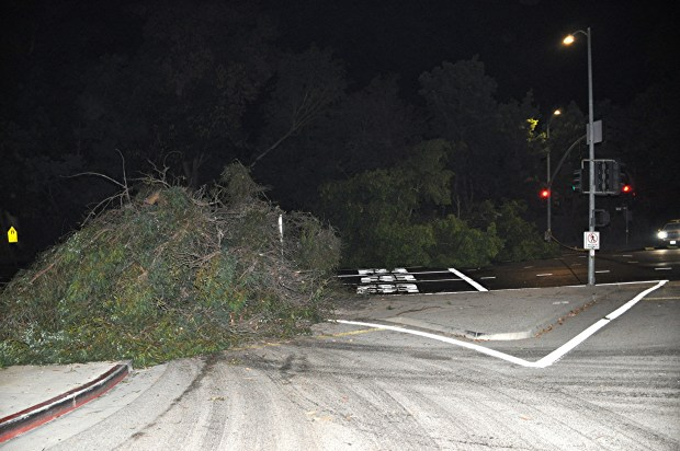 Flooding from water line break topples trees, shuts Sunset Blvd. in Westwood