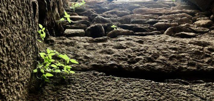 Erba cresce nella roccia adattarsi all'ambiente che ci circonda consigli di Scomfort Zone