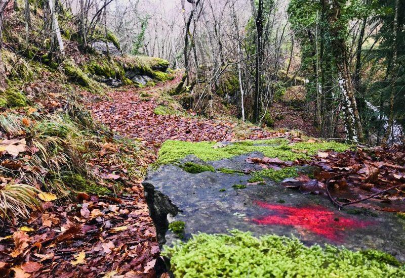 Click & Trek Scomfort Zone trekking fotografico parco nazionale delle foreste casentinesi