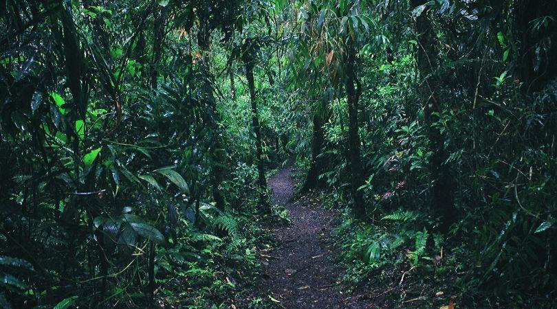 Leticia viaggio Foresta Amazzonica in Colombia