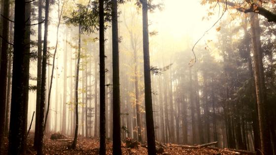 Itinerario a piedi in Campigna parco foreste casentinesi trekking di gruppo
