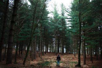 Abitare la terra trekking foreste casentinesi con spettacolo Silvio Castiglioni